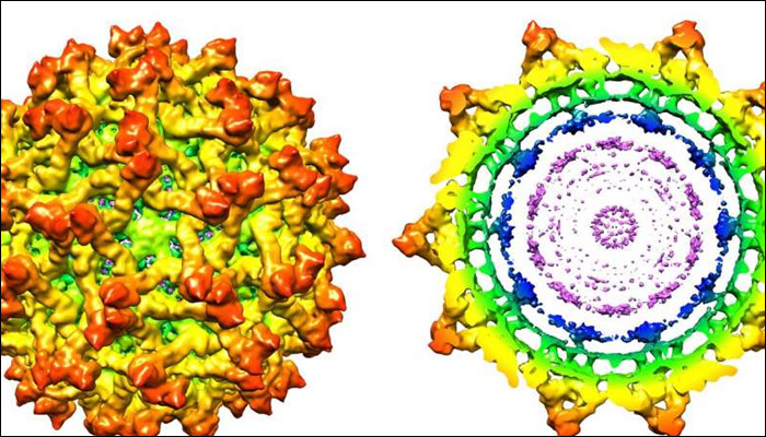 Purdue University researchers detect new Zika virus structure