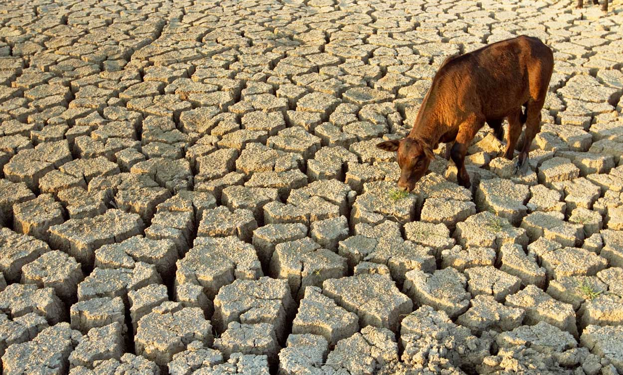 Sri Lanka dry spell: India to give eight water bowsers, 100 tons of rice