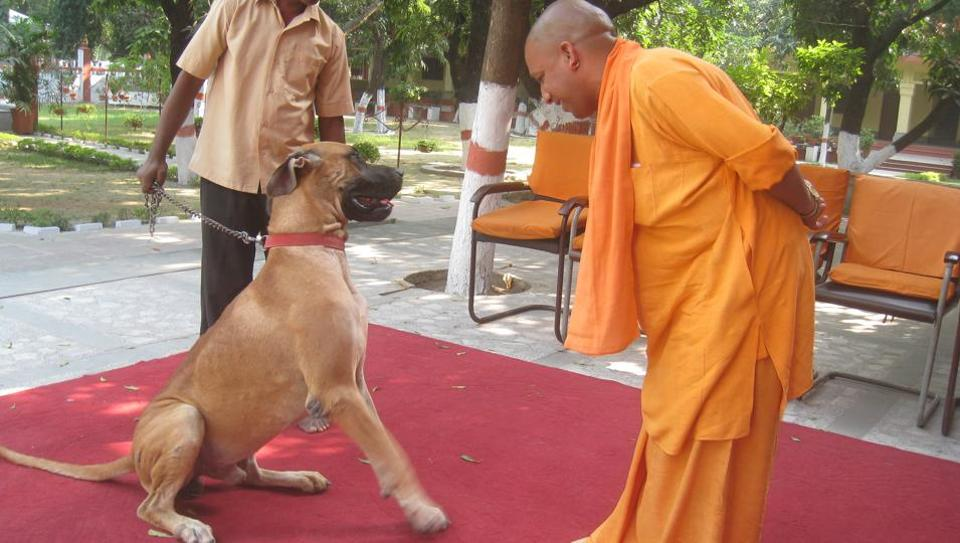 "UP chief minister  Aditya Nath: A Hindutva pioneer, ""green"" saint and  animal lover"