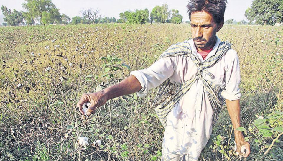 Narendra Modi govt raises rice, cotton purchasing costs as farmer's protests mount