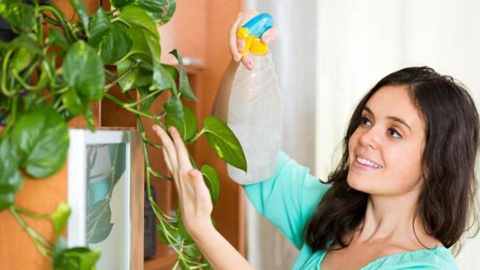 Create an indoor garden on a window sill or balcony. Here are tips to get started