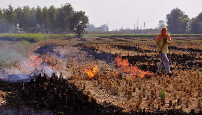North India gasps, chokes. But crop burning continues.