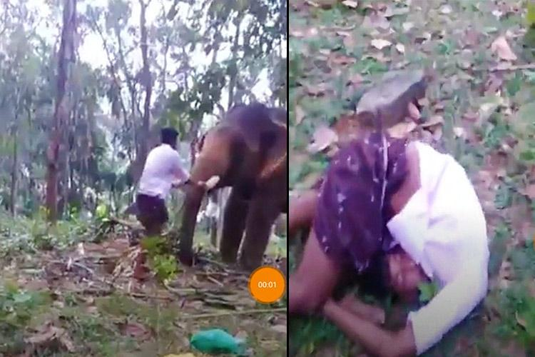Watch: Kerala man tries 'Baahubali' stunt, gets punched in the gut by elephant