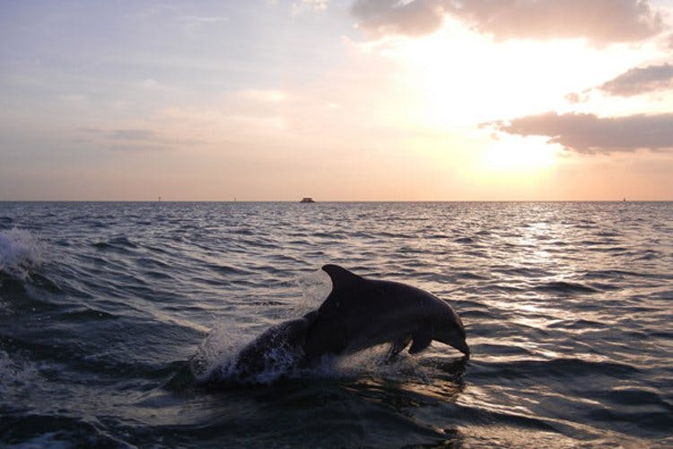 Five Beaches In Goa You Need To Hit Up For Dolphin-Spotting