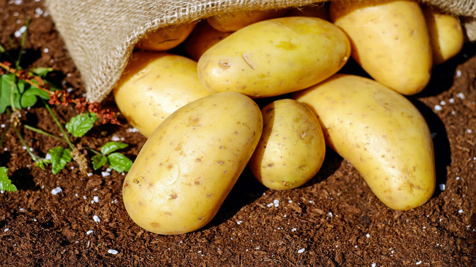 Potatoes worth crores being dumped on streets across Uttar Pradesh