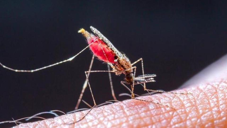 Toothpaste ingredient could fight malaria, according to 'robot scientist'
