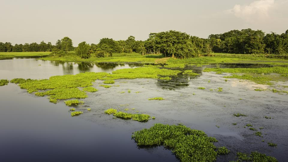Here's why you need to visit Majuli in Assam. It's home to the world's largest river island