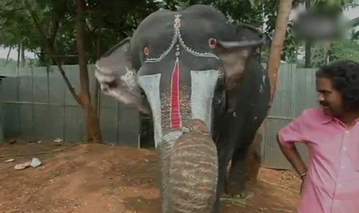 Caught on camera: This elephant plays the mouth organ (expertly) in Coimbatore