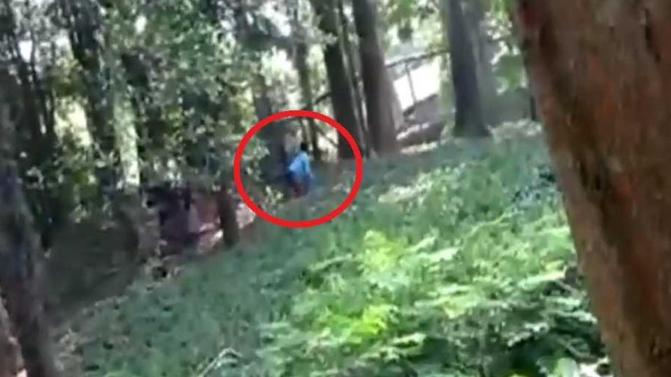 Man jumps into lion enclosure at Kerala zoo, says wanted to 'have a chat'
