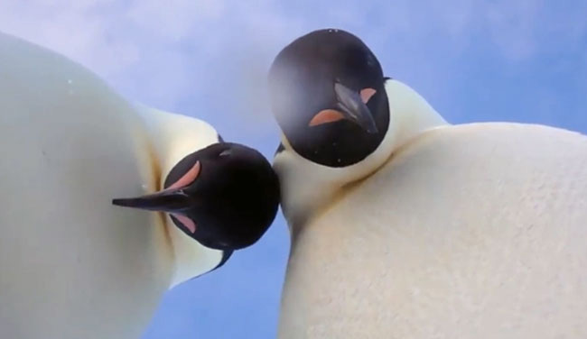 Penguins Found A Camera - And Then Filmed Themselves. Watch