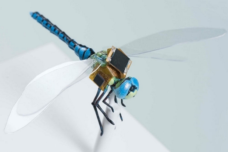Scientists Turned This Dragonfly Into A Remote-Controlled Cyborg Drone