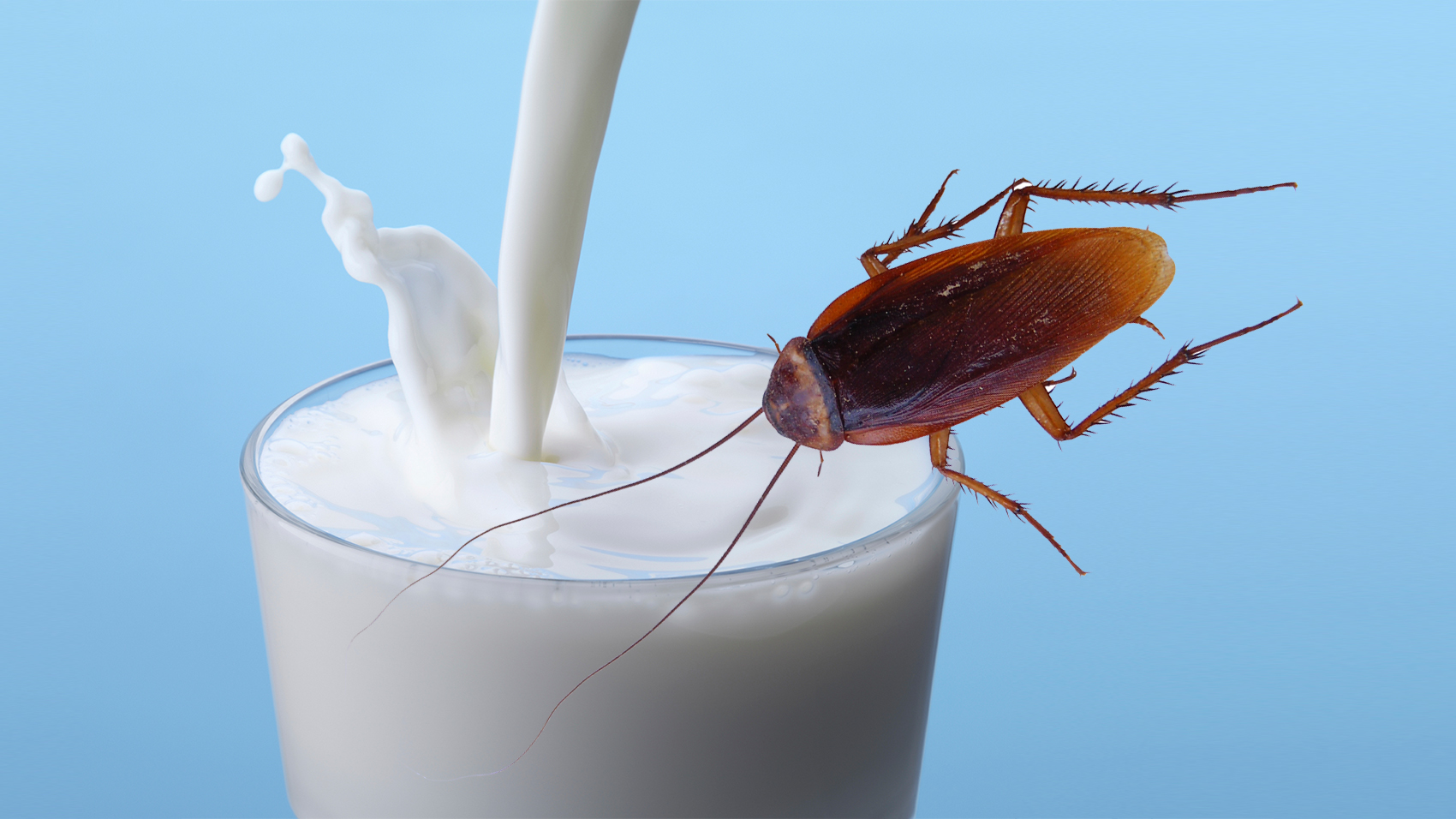 Cockroach milk may be the hottest health food trend you didn't know existed