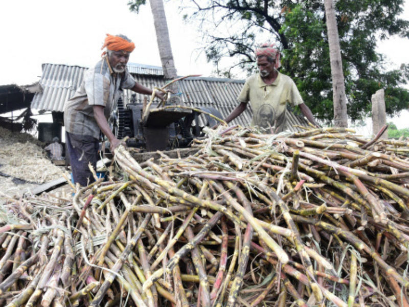 Kairana's bitter pill: Sugarcane economy needs reform not a Rs 8,000 crore bandage