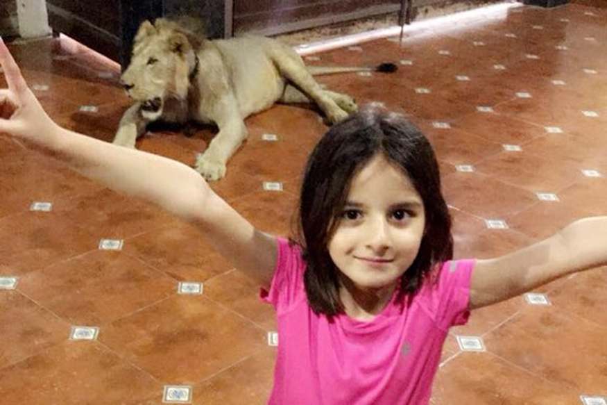 Afridi Feeds Deer as Daughter Celebrates With Lion in the Background