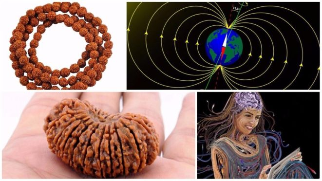 The Scientific Properties of Rudraksha that have medicinal values