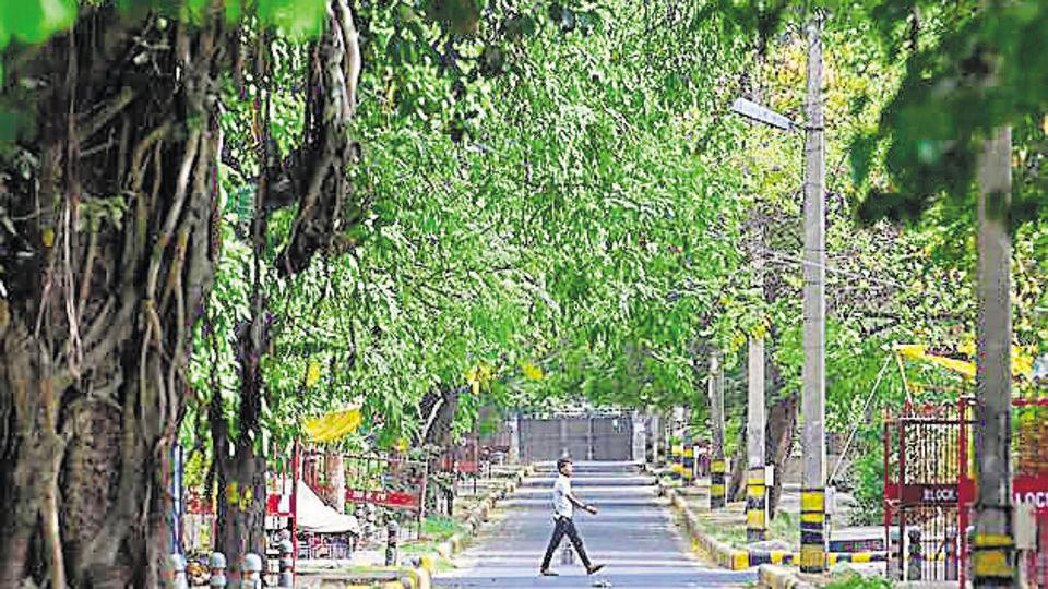 16,500 trees: A huge price for south Delhi's redevelopment projects