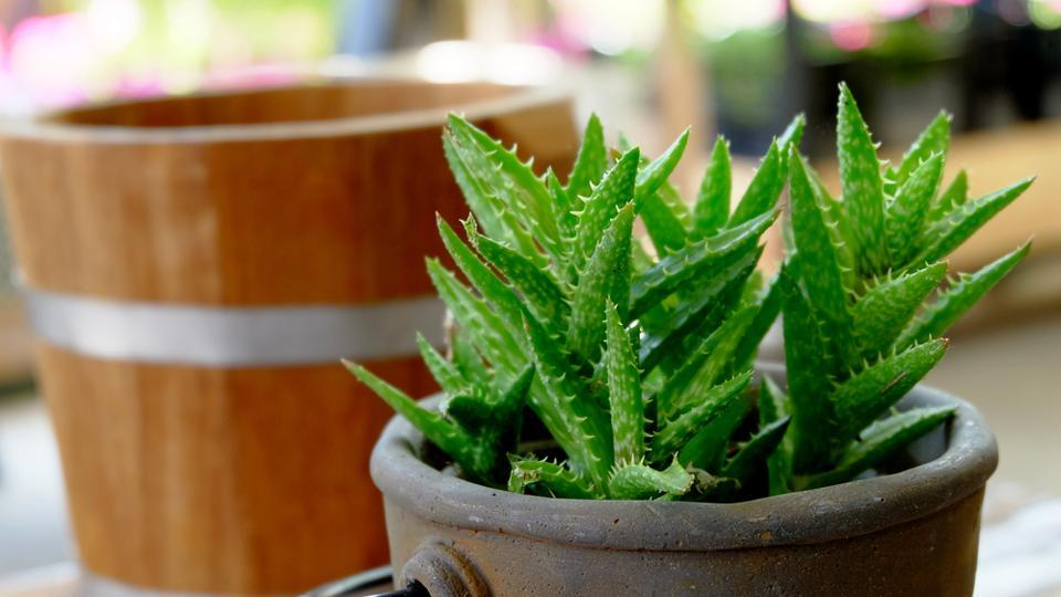 Tulsi, rosemary, peppermint and other healing plants that can change your life