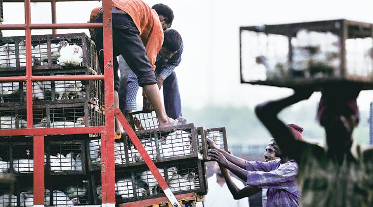 Delhi High Court bans slaughtering of birds at Ghazipur mandi