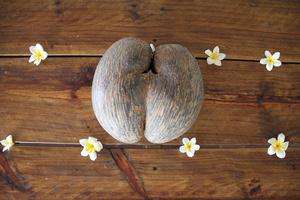 Coco de Mer - The Sexy Coconut Of Seychelles!