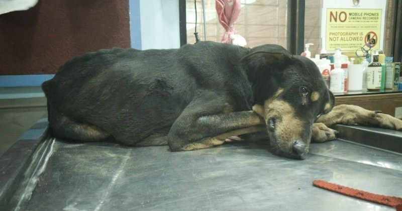 Mumbai Male Dog Brutally Gang Raped By 4 Low Lives Dies After Fighting For His Life
