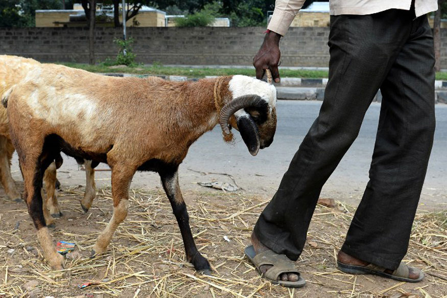 These Charity Vending Machines Will Dish Out Goats to Poor People Around the World