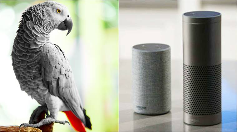Naughty parrot befriends owner's Alexa and orders goodies from Amazon