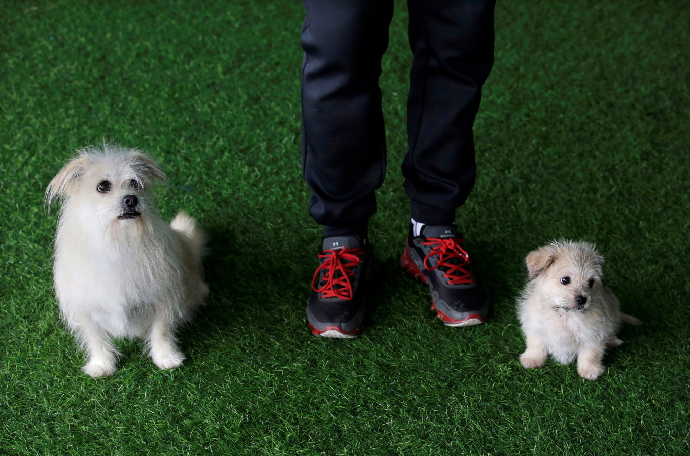 This time a pet pooch has been cloned in China