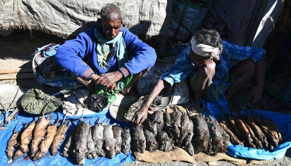 Boiled, skinned, cooked rats on top of holiday menu in Assam village