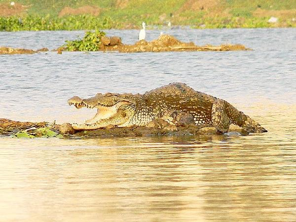 Two sisters jump into crocodile-infested waters to save passengers onboard a capsized boat in Odisha