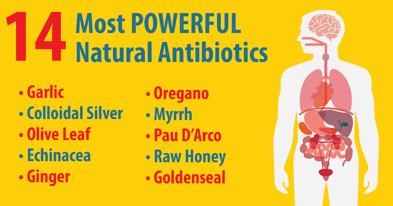 Natural Antibiotics That Kill Bacteria in Your Body