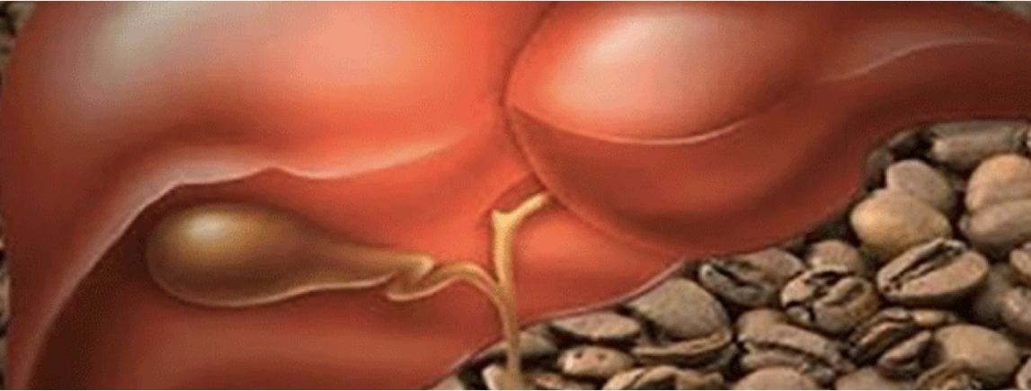 This is What 2 Cups of Coffee Per Day Can Do to Your Liver