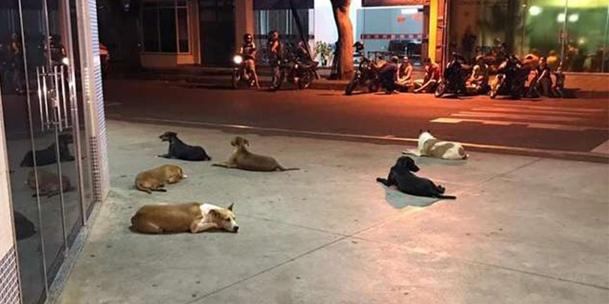 When The Homeless Owner Ended Up In Hospital, His Dogs Waited For Him Patiently Outside