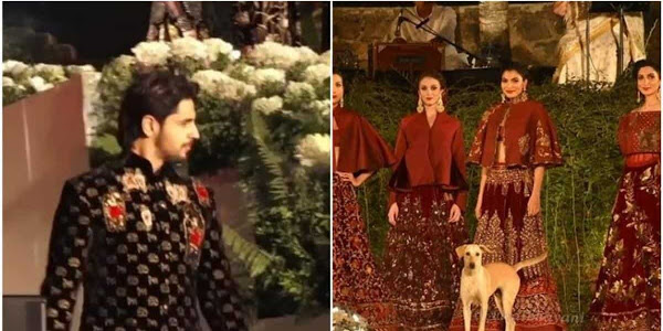 Stray dog hijacks Sidharth Malhotra's ramp walk at fashion show, poses with models. Watch video