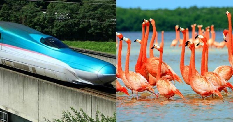 Bullet Train Will Pass Through Flamingo Haven & Leopard National Park. Why Nobody Cares?