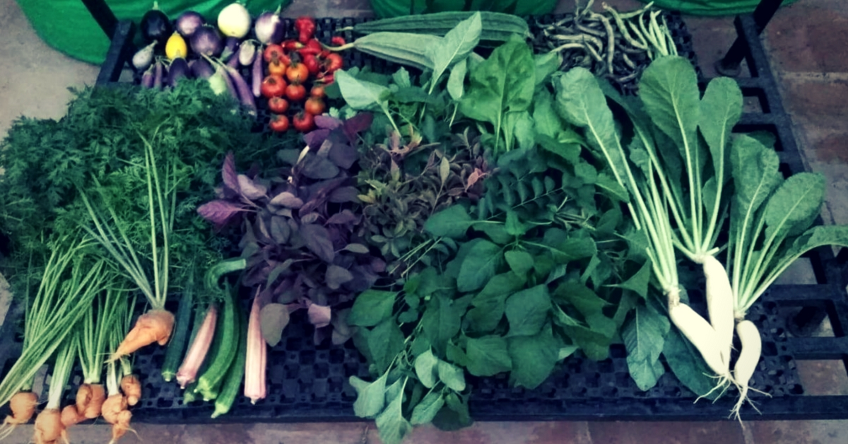 Chennai Family Creates 'Oxygen Chamber' on Terrace, Harvests 300 Bags of Veggies!