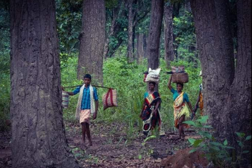 Not Just 10 Lakh, But 23 Lakh Tribal & Forest-Dwelling Families May Face Eviction; Govt Silence Fuels Anger