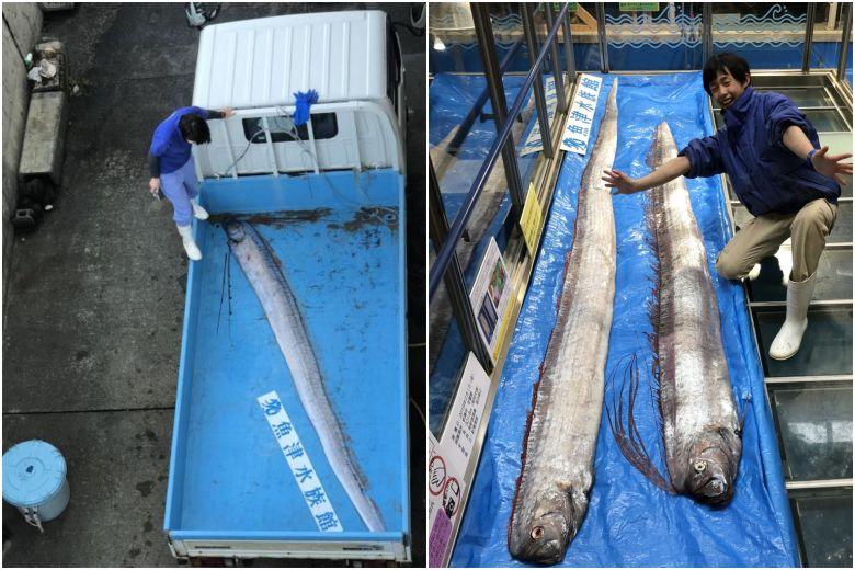 Rare Fish, Seen As Harbingers Of Earthquakes, Tsunamis, Caught In Japan