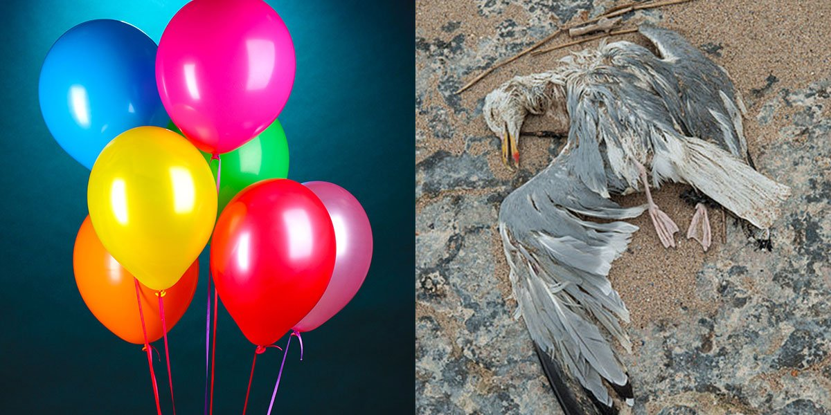 Stop Using Party Balloons, They Are Killing All The Seabirds