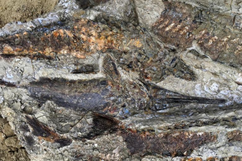 Fossils Show World-Wide Catastrophe On The Day Dinosaurs Died