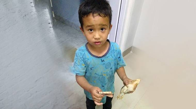 Mizoram boy accidentally runs over chicken, takes it to hospital with all the money he had