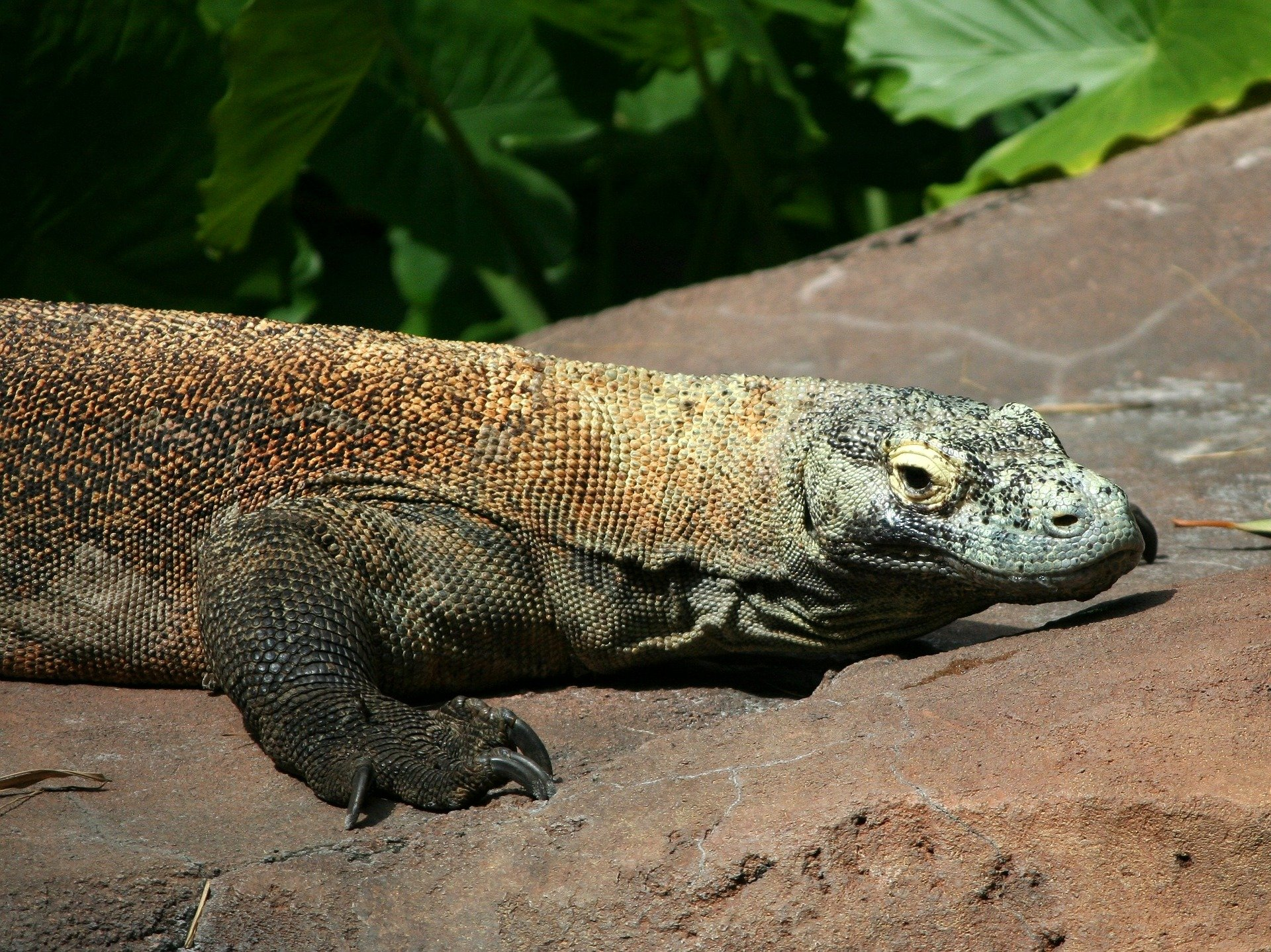 The Indonesian Government Closes Komodo Island Because People Are Stealing Its Dragons