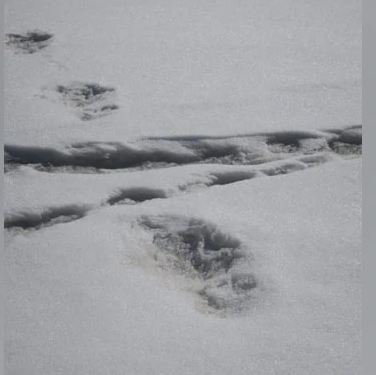 """Yeti"" Footprints Sighted By Expedition Team, Tweets Indian Army"