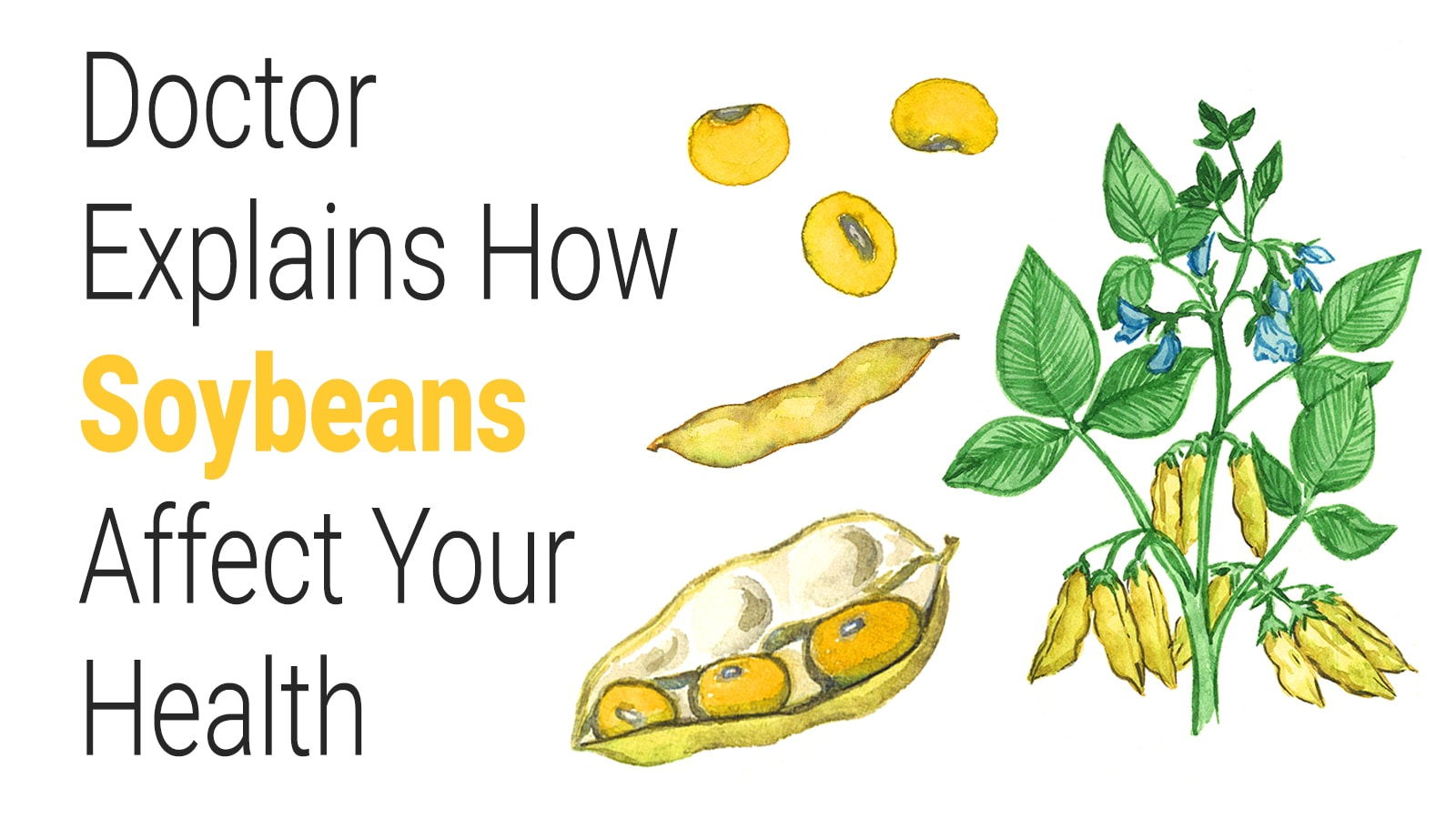 Doctor Explains How Soybeans Affect Your Health