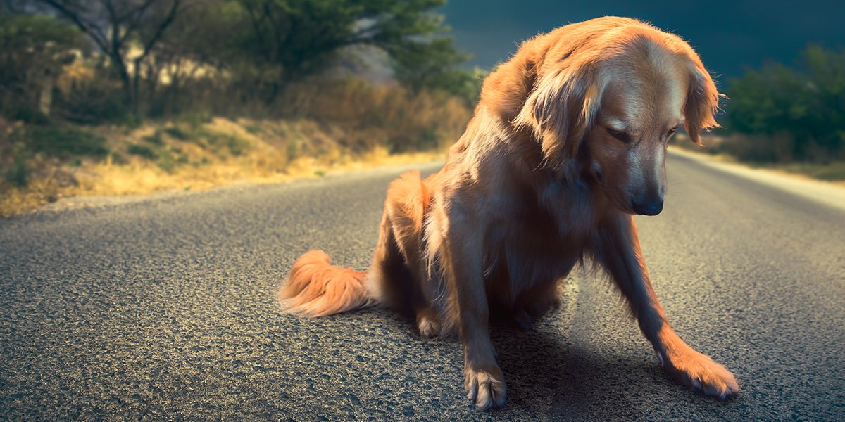 The Loss of A Pet Is More Tragic Than Many People Realize