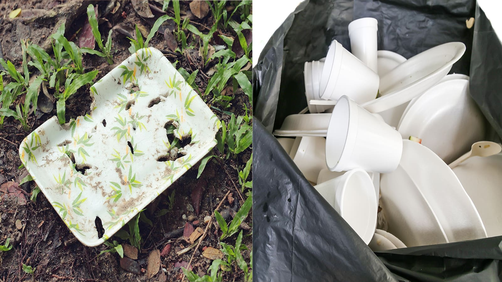Maine Declares Ban on Styrofoam That Hurts the Environment