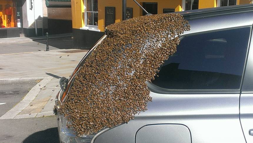 20.000 Bees Follow A Car for Two Days Trying To Rescue The Queen