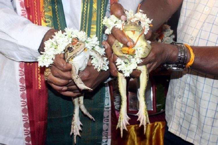 Now, a frog wedding in Udupi to 'appease rain god', complete with mangalsutra and lunch