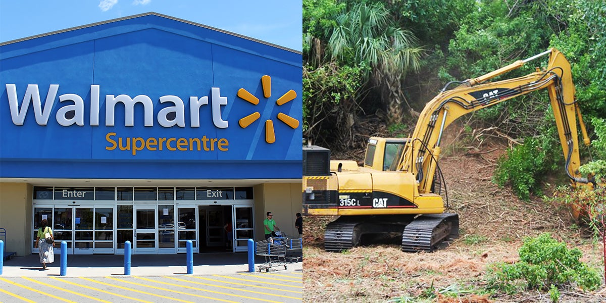 Rare Miami Forest Will Be Destroyed To Make Room For Walmart