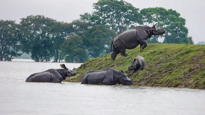 Kaziranga needs to flood to survive, real problem is roads & hotels in animal escape path