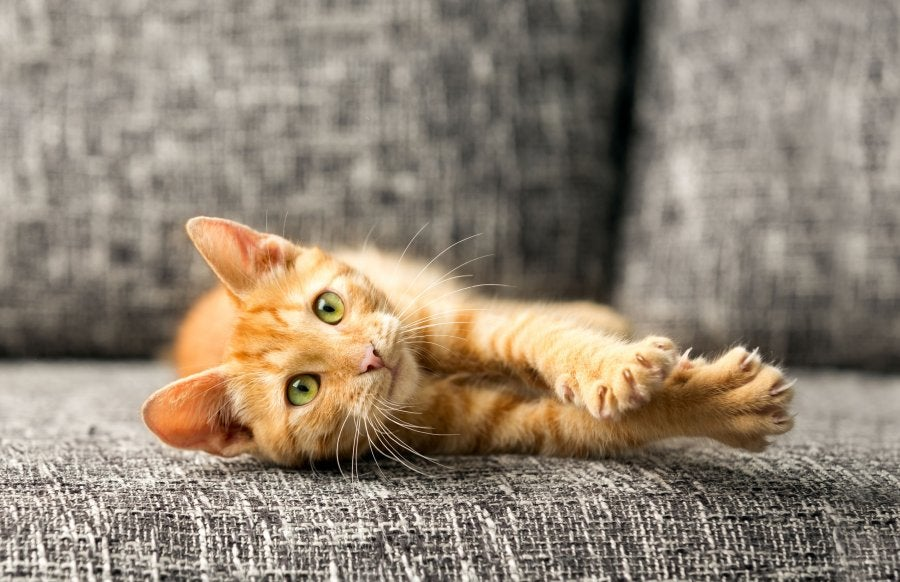 New York Became The First State To Ban The Declawing Of Cats